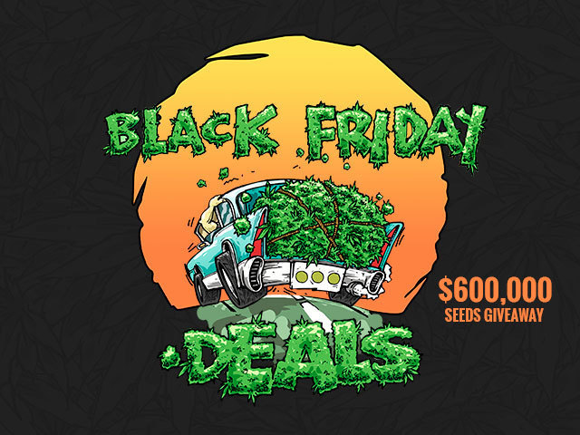 black Friday, free sees, seedman