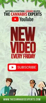The Cannabis Experts - You Tube